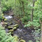 Oberhalb von Marxzell hat die Alb stellenweise den Charakter eines Gebirgsbachs.