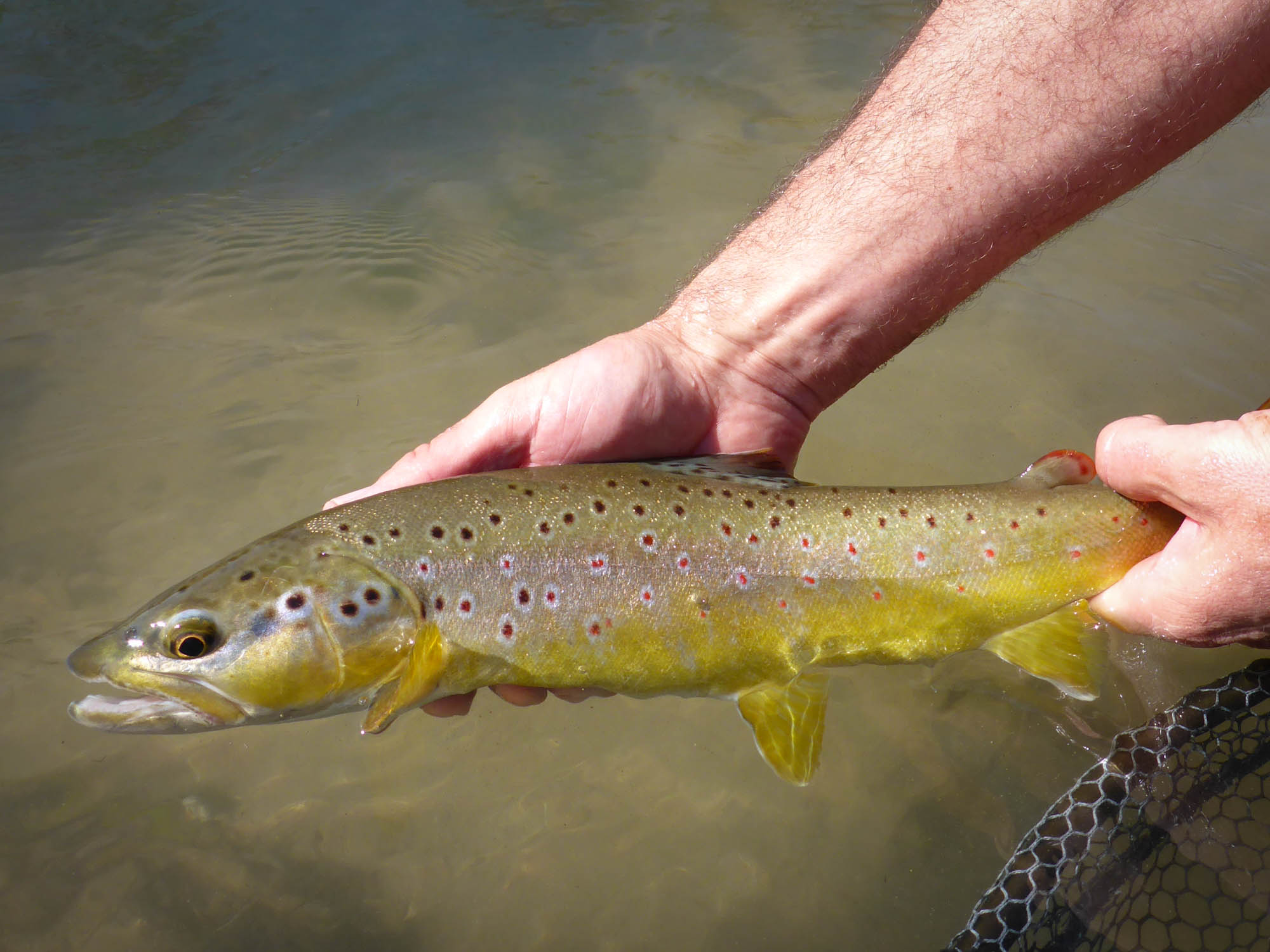 Three days, three rivers - Troutfishing Germany
